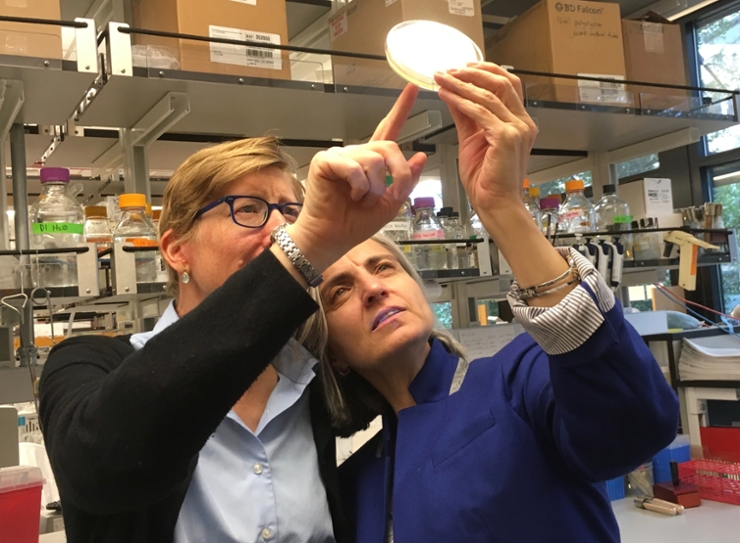 Professors Karen Ottemann and Fitnat Yildiz in the Lab